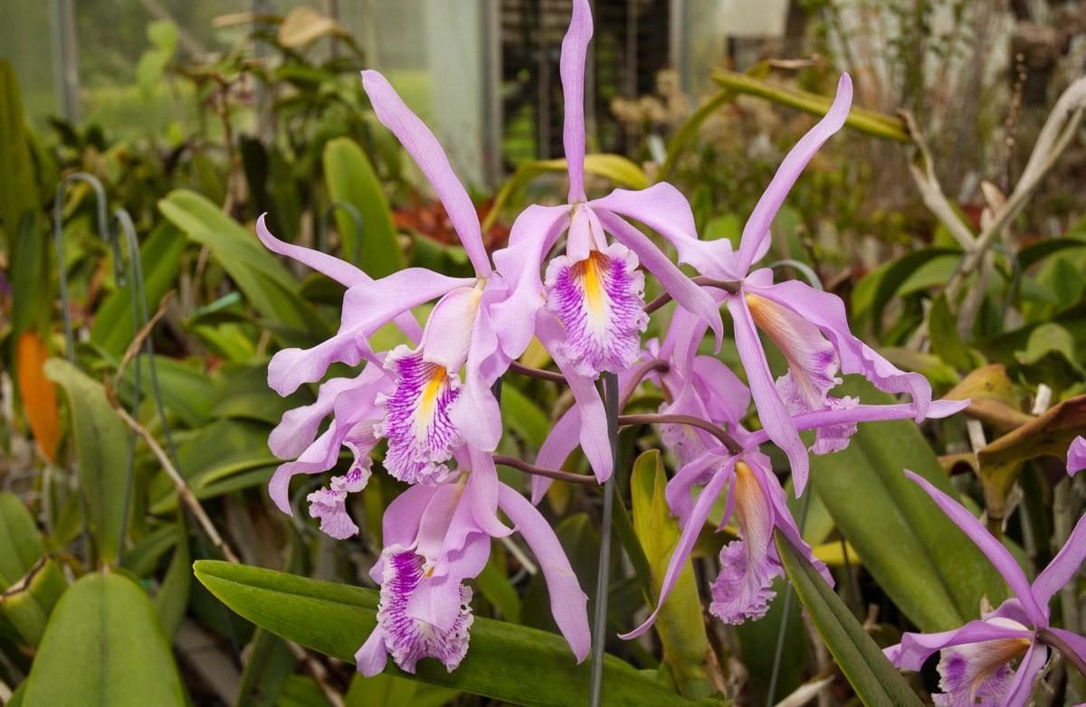 Orchids-8