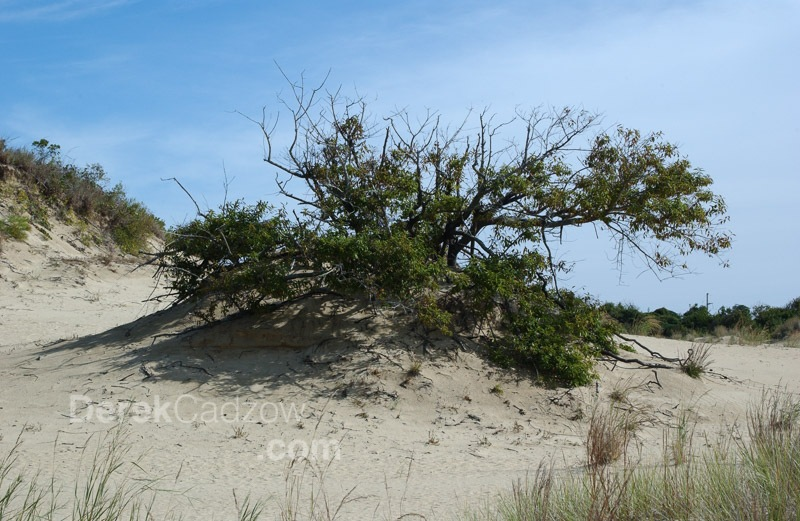 Outer-Banks-12
