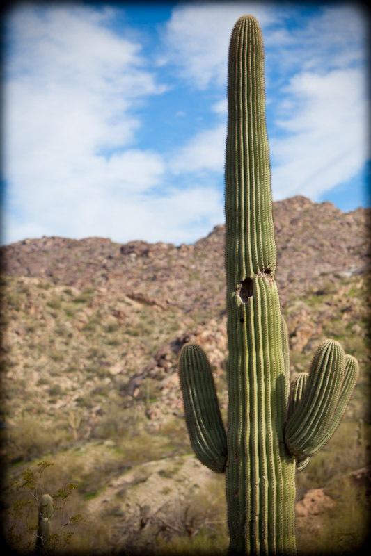 Scottsdale-21