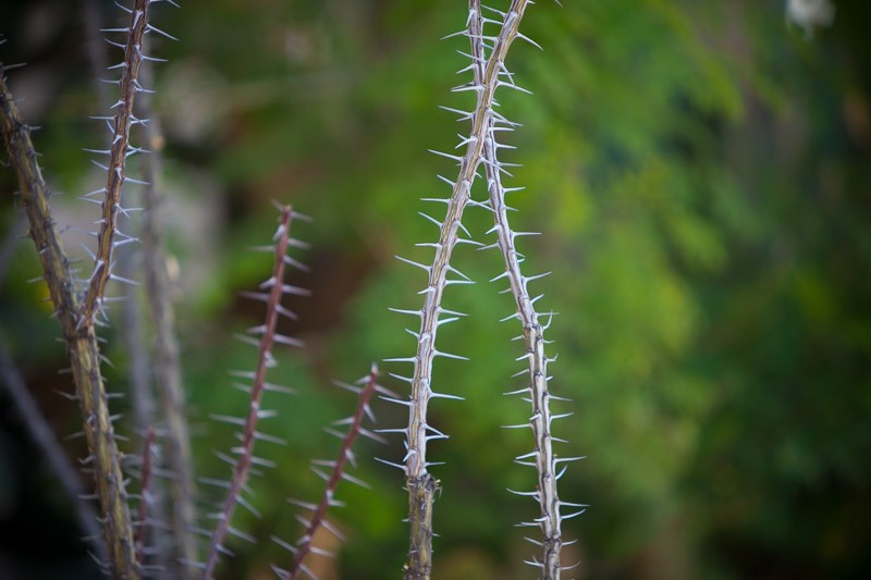 Scottsdale-4