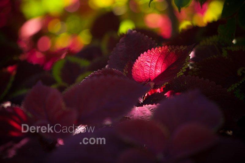 Botanical_Gardens-10