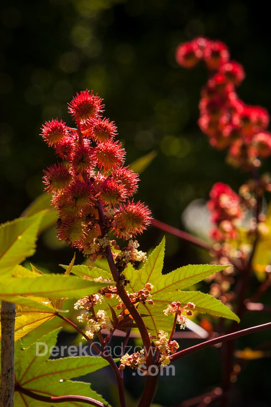 Botanical_Gardens-11