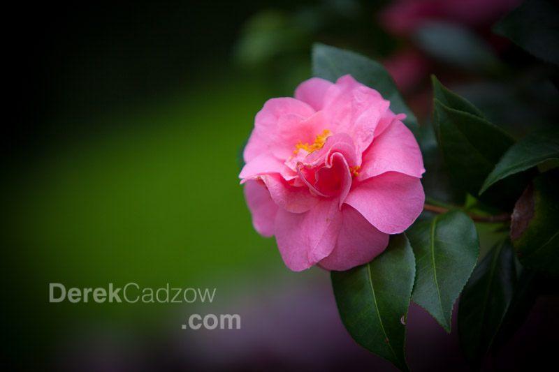Botanical_Gardens-16