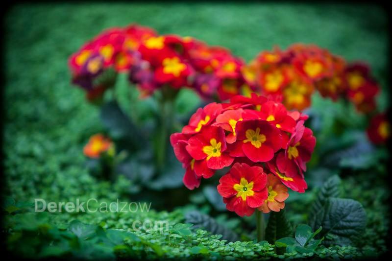 Botanical_Gardens-17