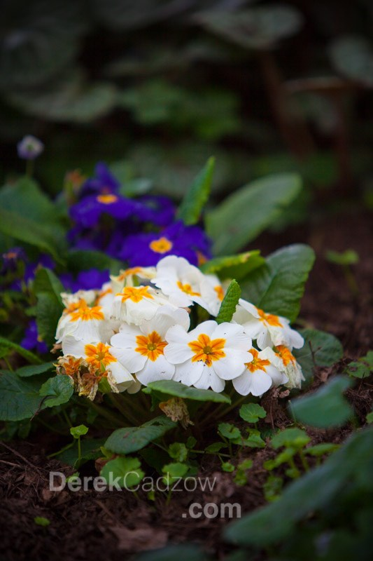 Botanical_Gardens-18