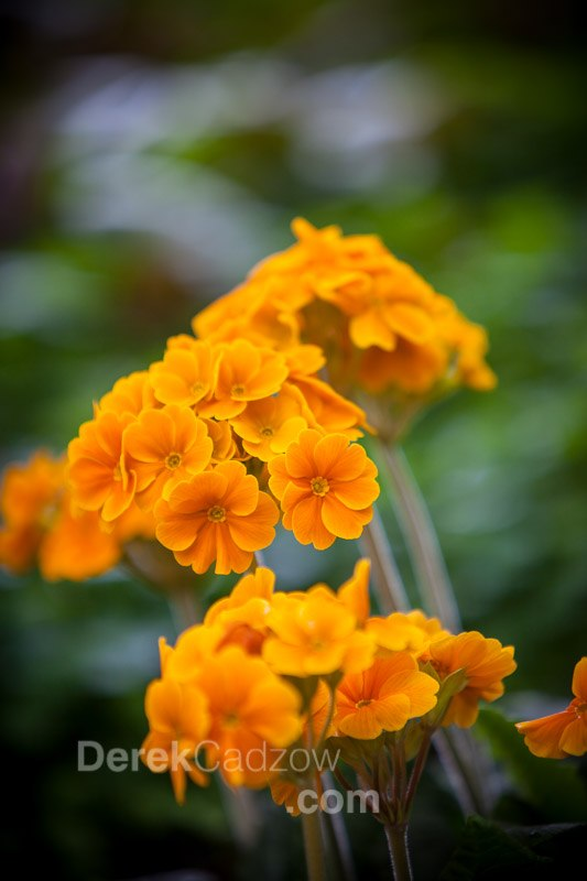 Botanical_Gardens-19
