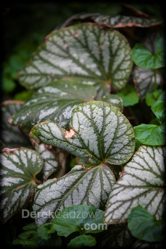 Botanical_Gardens-20