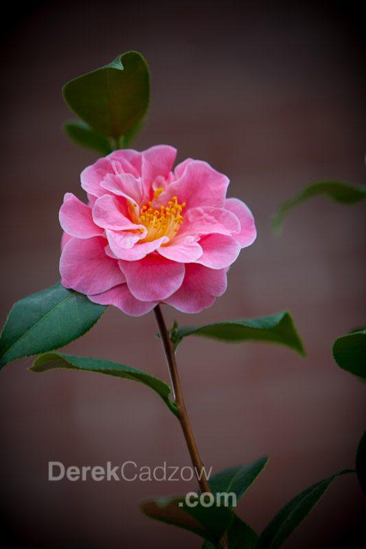 Botanical_Gardens-21
