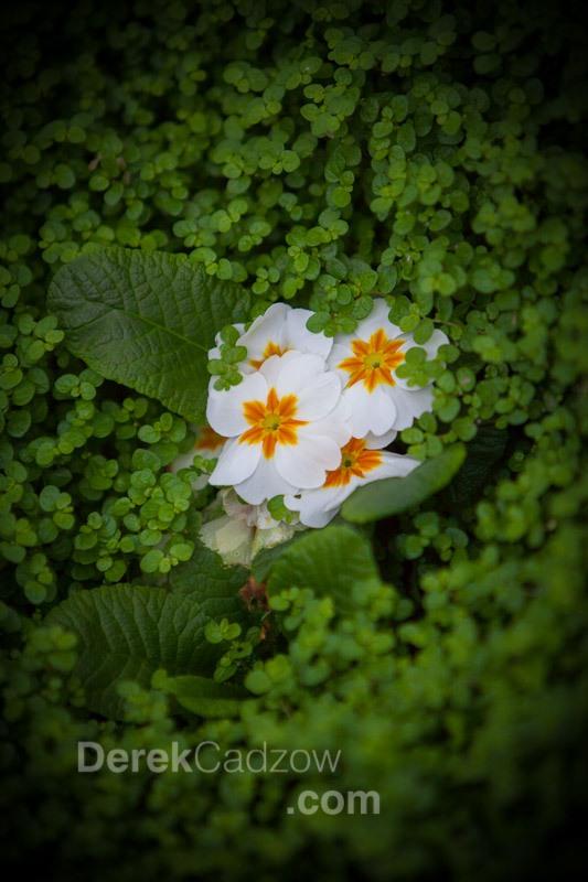Botanical_Gardens-23