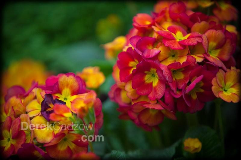 Botanical_Gardens-24