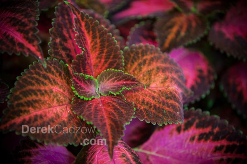Botanical_Gardens-25