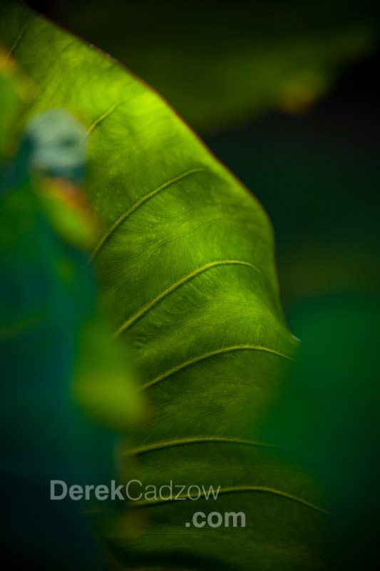 Botanical_Gardens-9