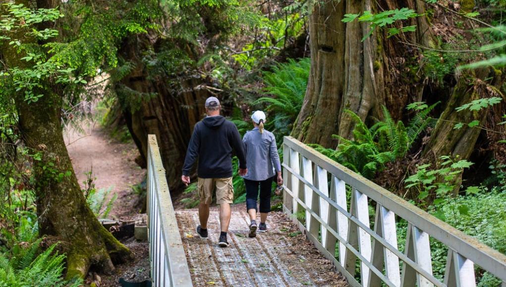 Vancouver Island rain forest and coastline
